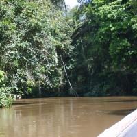 Yasuni ITT, regnskogen og oljen