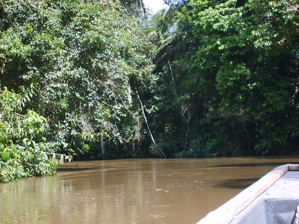 Fra Ecuadors regnskog