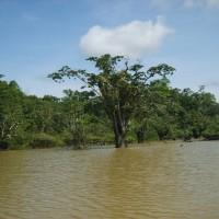 Vampyrene i den amazoniske regnskogen