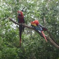 El Parque Historico i Guayaquil