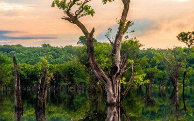 Opplev Ecuadors regnskog