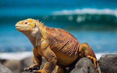 Reise til Galápagos