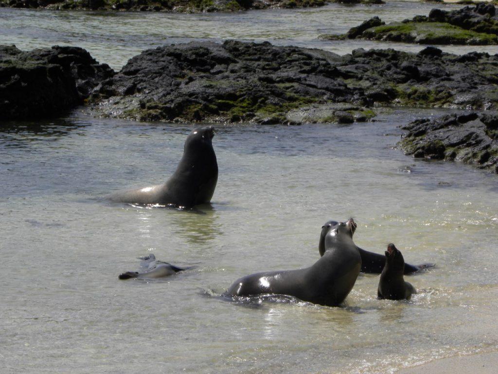 Rikt dyreliv på Galapagosøyene. Foto Lars Ove Hansen